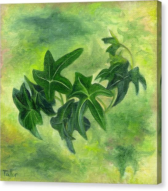 English Ivy Canvas Print