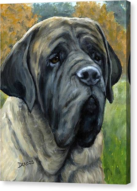 Mastiffs Canvas Print - English Mastiff Black Face by Dottie Dracos