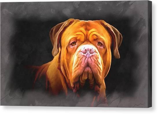 English Mastiff Canvas Print
