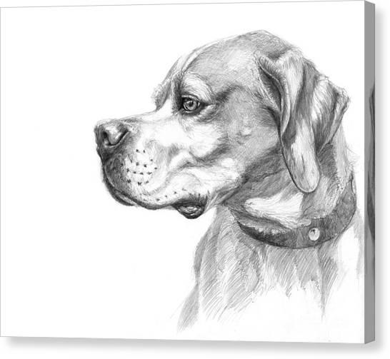 English Pointer Sketch Canvas Print by Svetlana Ledneva-Schukina