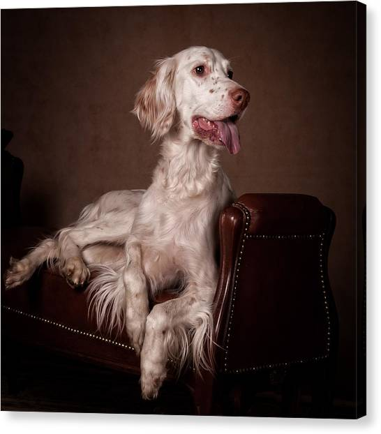 Canvas Print - English Setter... by Tanya Kozlovsky