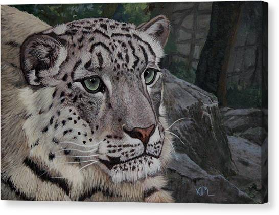 Canvas Print - Enif- Snow Leopard by Antonio Marchese