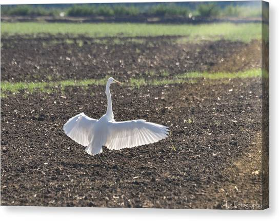 Enjoying The Sun Canvas Print
