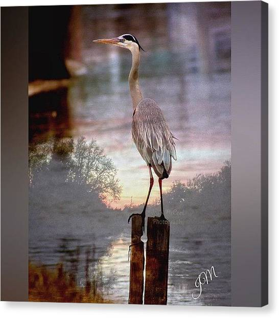Swamps Canvas Print - #enlight #heron #sunset #bayou by Joan McCool