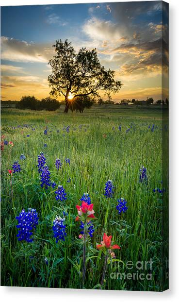 Prairie Sunrises Canvas Print - Ennis Tree by Inge Johnsson