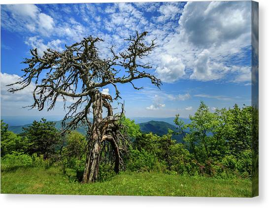 Ent At The Top Of The Hill - Color Canvas Print