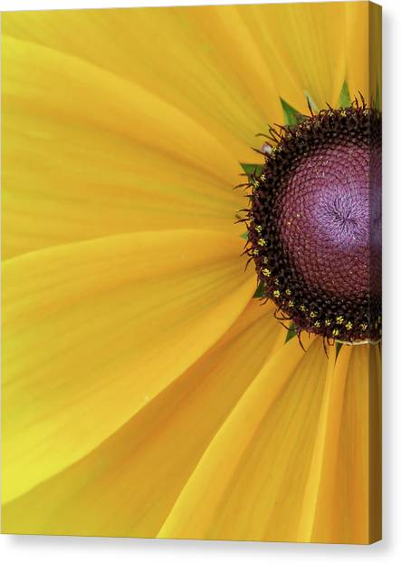 Canvas Print featuring the photograph Enter Stage Left by David Coblitz