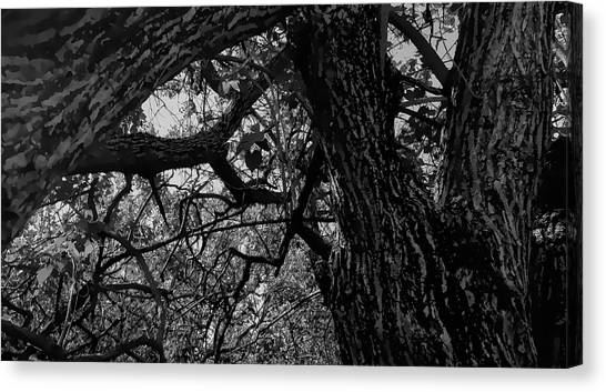 Enter The Woods In Black And White Canvas Print