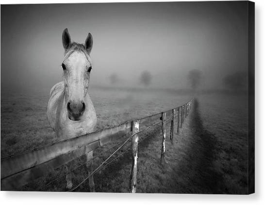 Cheshire Canvas Print - Equine Fog by Taken with passion