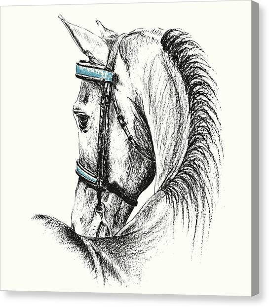 Equine Sketches Canvas Print by JAMART Photography