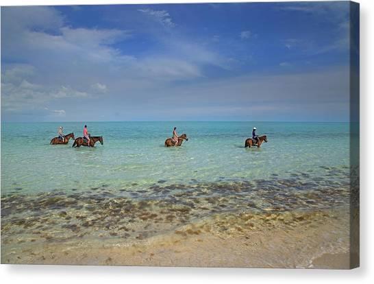 Carribbean Canvas Print - Equine Splendor  by Betsy Knapp