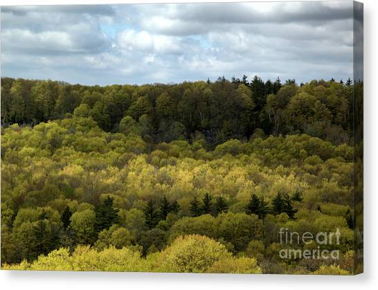 Escarpment Spring 2 Canvas Print