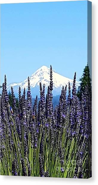 Essence Of Lavender Canvas Print