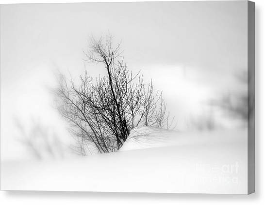 Essence Of Winter Canvas Print