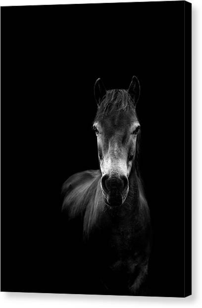 Ponies Canvas Print - Essence by Paul Neville
