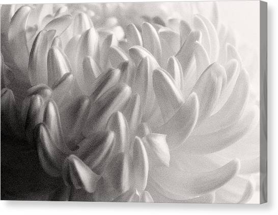 Ethereal Chrysanthemum Canvas Print