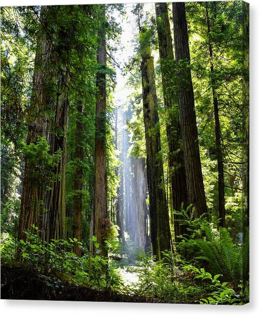 Ethereal Tree Canvas Print