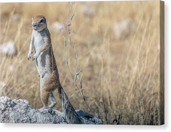 Meerkats Canvas Print - Etosha - Namibia by Joana Kruse