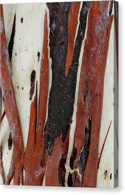 Eucalyptus Bark Abstract 2 Canvas Print