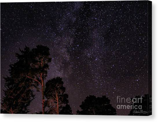 Eucalyptus Galaxy Canvas Print