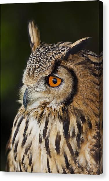 Eurasian Eagle-owl Bubo Bubo Canvas Print