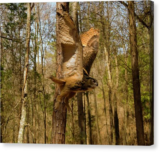 Eurasian Eagle Owl In Flight Canvas Print