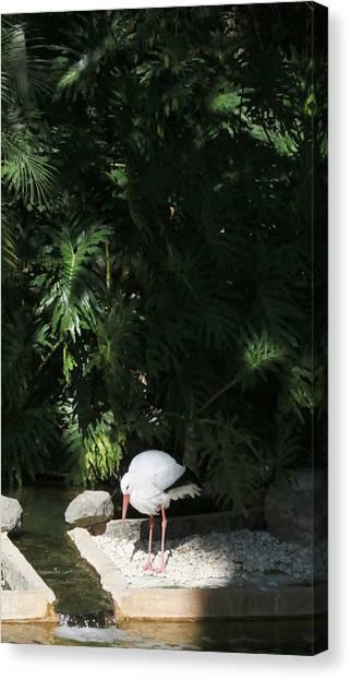 Storks Canvas Print - European White Stork by John Siron
