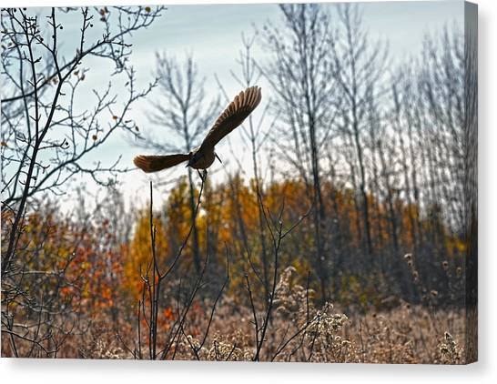 Woodcock Canvas Print - Evanescent Beauty Of Woodlands by Asbed Iskedjian
