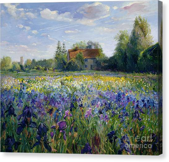 Irises Canvas Print - Evening At The Iris Field by Timothy Easton