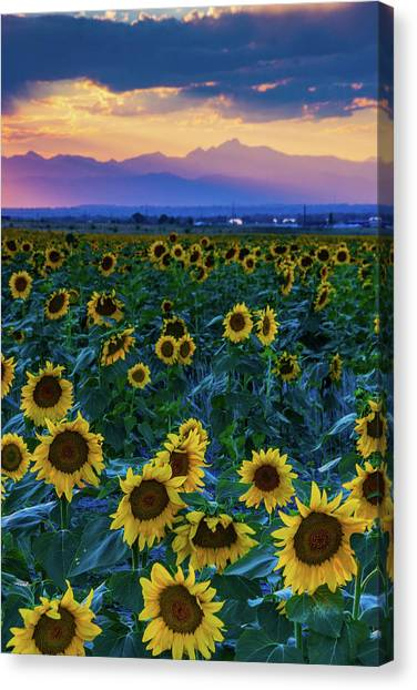 Evening Colors Of Summer Canvas Print
