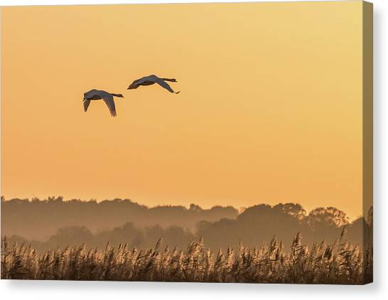 Evening Flight Home Canvas Print