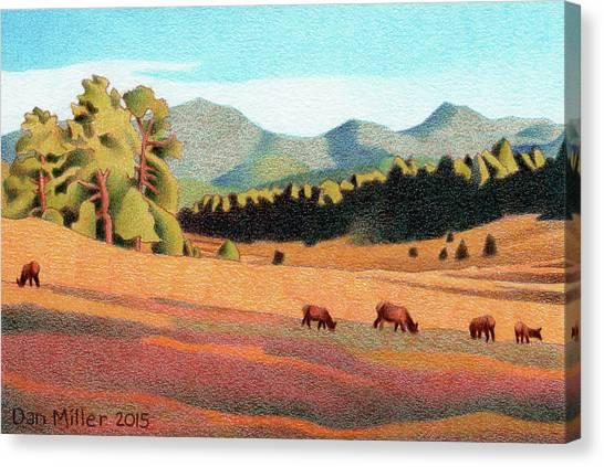 Evening Light Evergreen Canvas Print