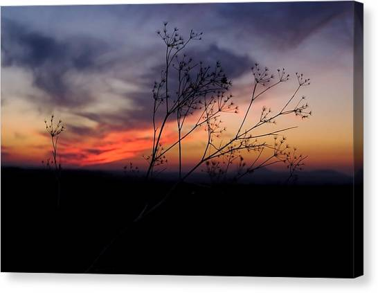 Evening Light Over Meadow Canvas Print