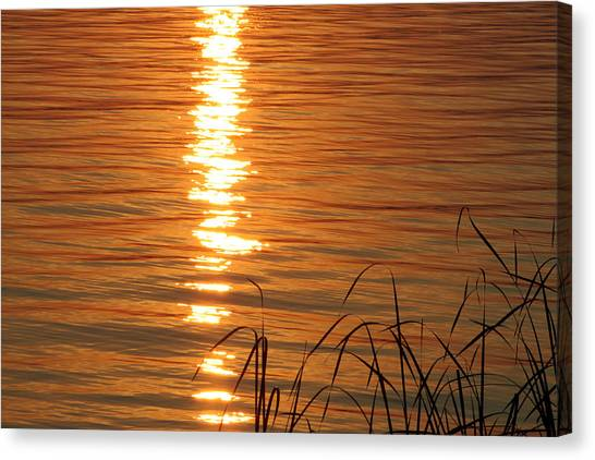 Canvas Print - Evening Of Gold by Evelyn Patrick