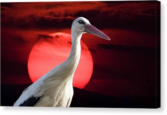 Evening Stork  Canvas Print