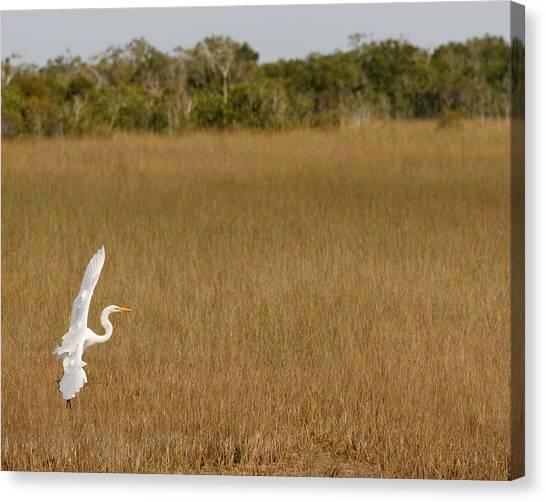 Everglades 429 Canvas Print