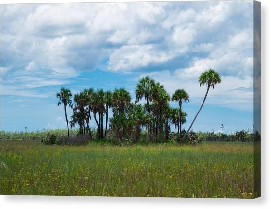 Everglades Landscape Canvas Print