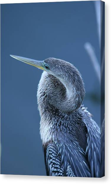 Everglades Canvas Print by Linda Russell