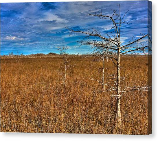 Everglades Canvas Print by William Wetmore