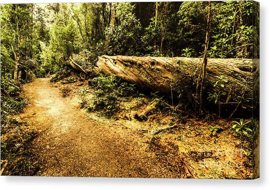Rain Forest Canvas Print - Evergreen Jungle Trails by Jorgo Photography - Wall Art Gallery