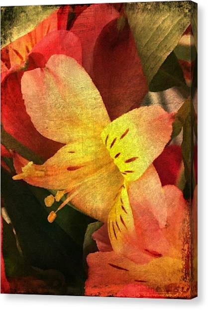 Canvas Print featuring the photograph Everlasting  by Betty Pauwels