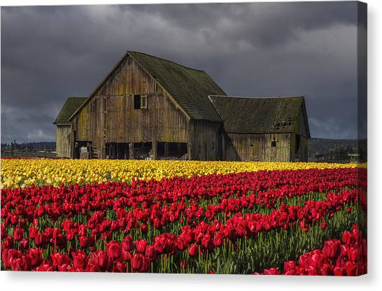 Kung Fu Canvas Print - Everlasting Blooms by Mark Kiver