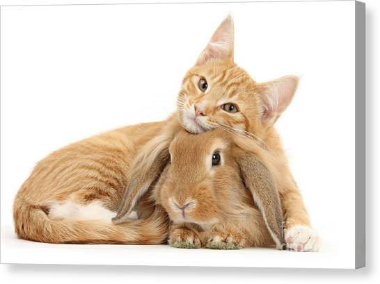 Everybody Needs A Bunny For A Pillow Canvas Print