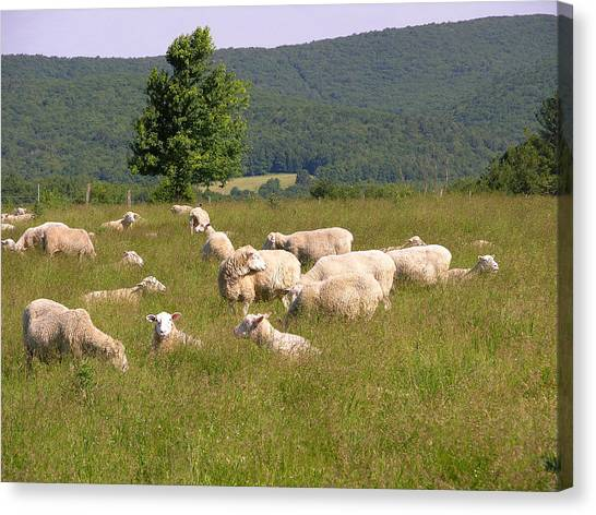 Ewe's Eye View Canvas Print by Peter Williams