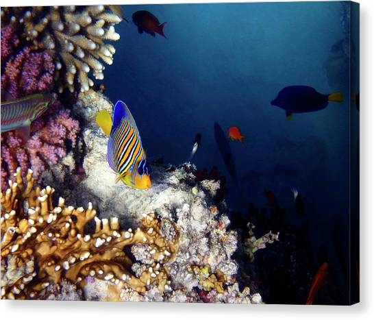 Exciting Red Sea World Canvas Print