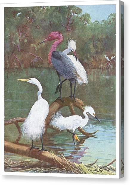 Exotic Birds Ll Canvas Print by David  Hicks