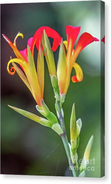 Exotic Flowers Canvas Print