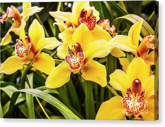Garden Canvas Print - Exotic Orchids  by Jorgo Photography - Wall Art Gallery