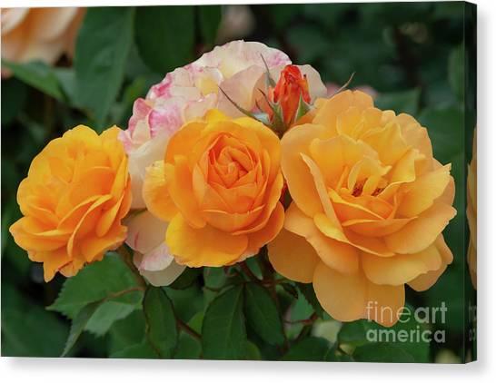 Experimental Roses 1 Canvas Print