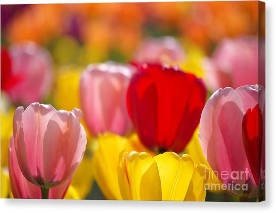 Explosion Of Colors Canvas Print
